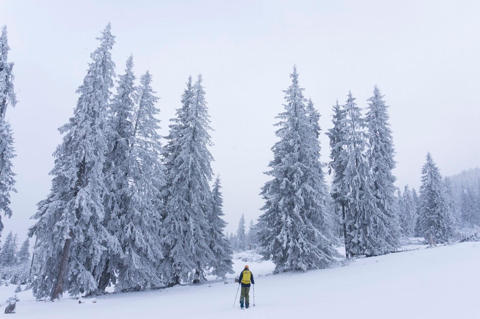 iarna-in-poiana-Faget-muntii-Vladeasa - Banda Rosie