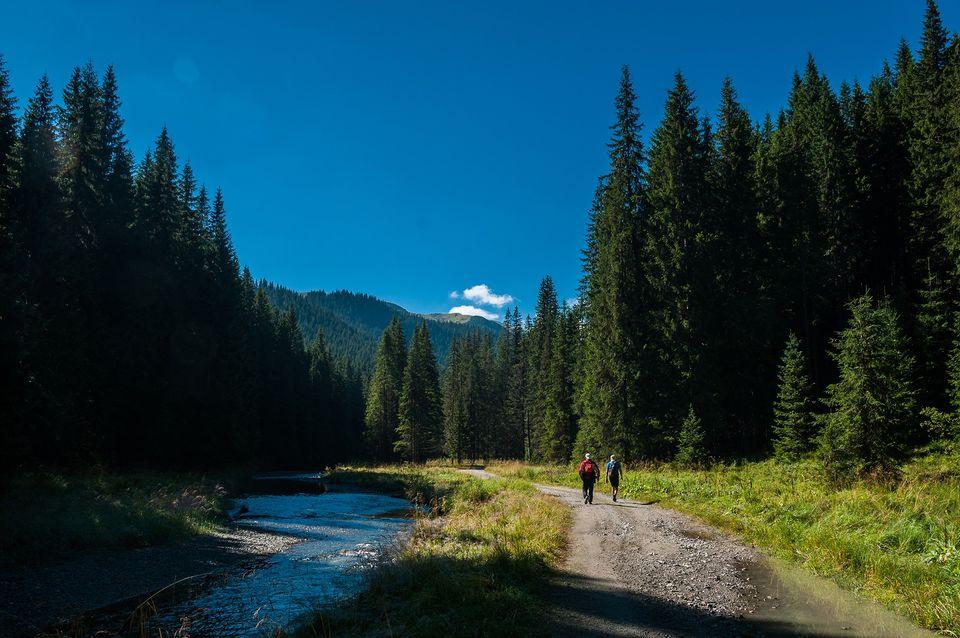 Drumul forestier Valea Lotrului - Morar Daniel
