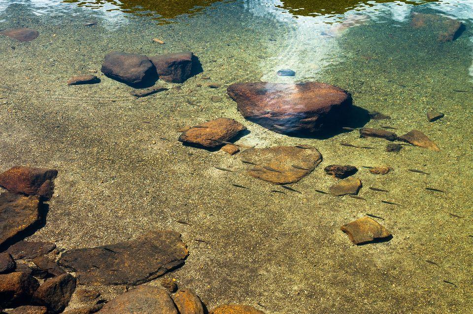 Pastravi in Lacul Galcescu - Morar Daniel