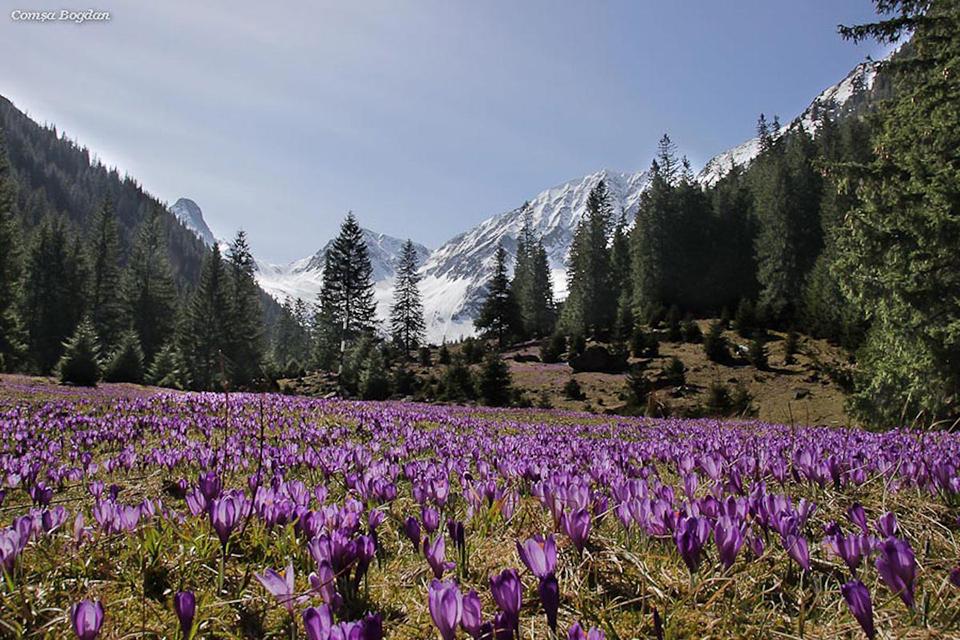 Branduse Valea Sambata - Comsa Bogdan