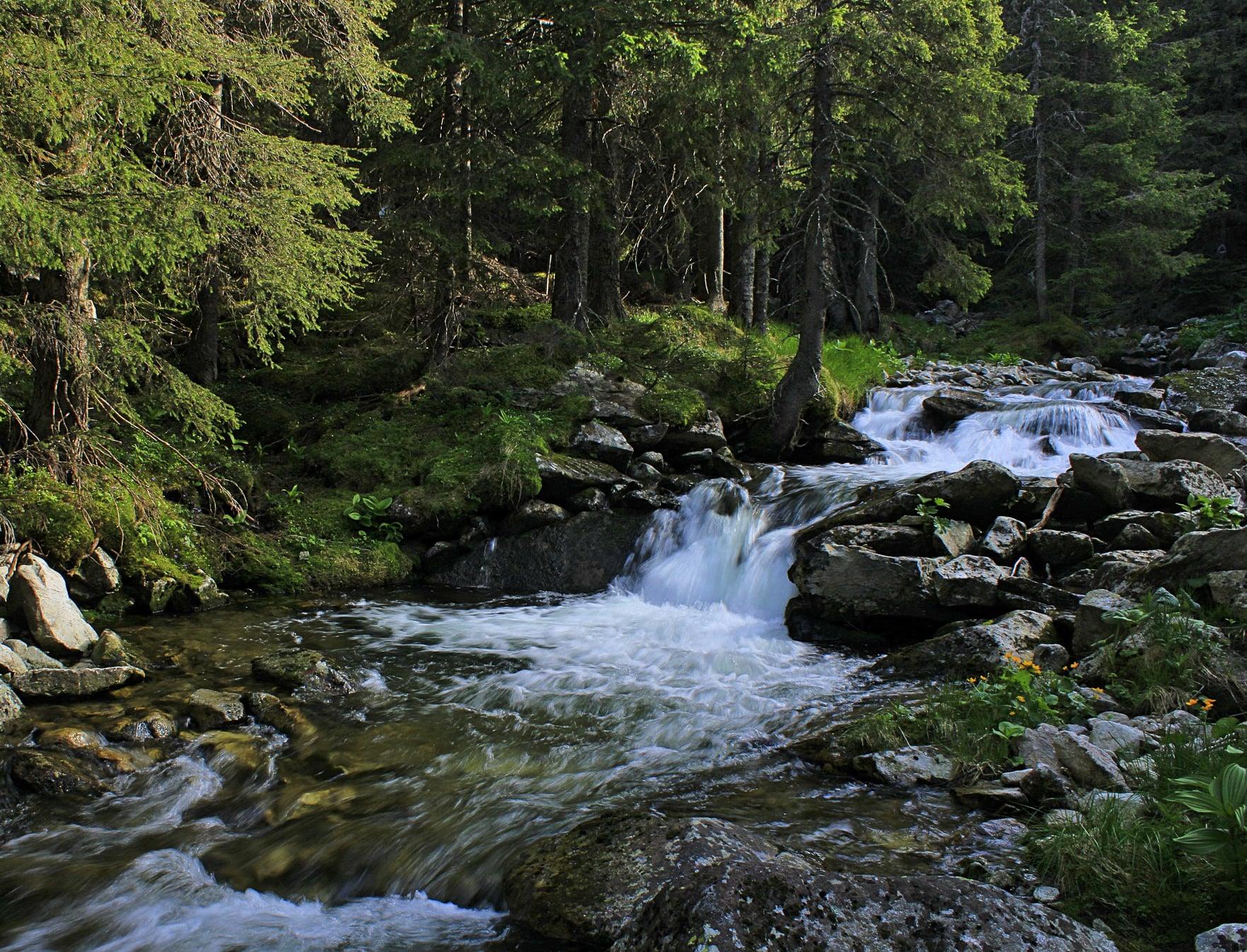 Pârâul Ștânișoara şi Cascadele de pe Valea Stânişoarei - Sima Constantin