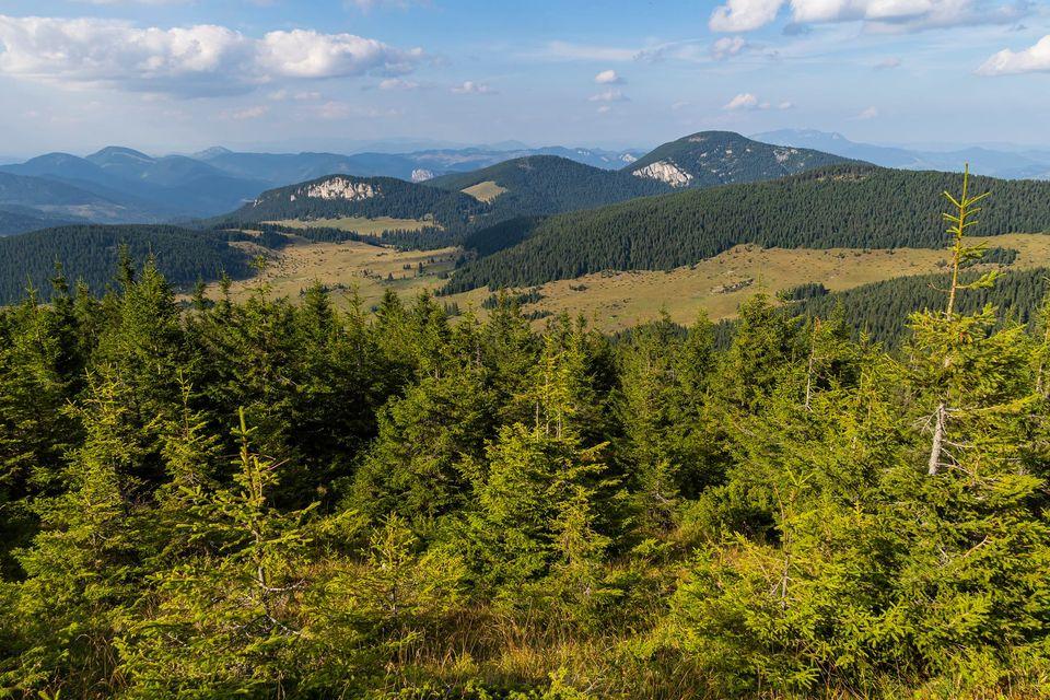 Vedere spre Poiana Albă, de pe vârful Hășmașul Mare - Andrei Pahomi