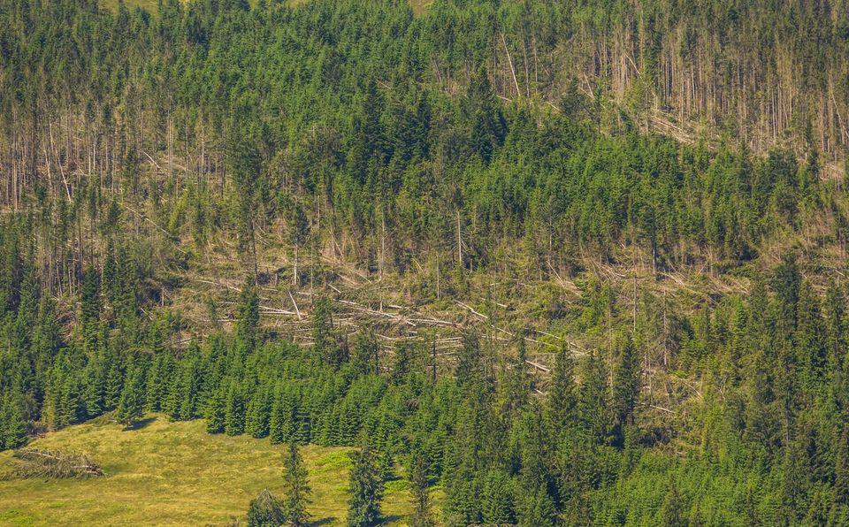 Furtuna in zona Balan - Comsa Bogdan