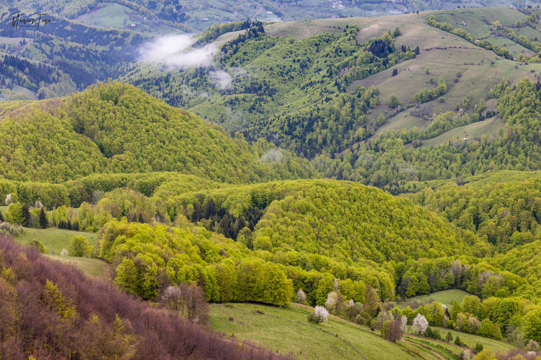 Culorile primăverii la poalele Masivului Vulcan - Marius Turc