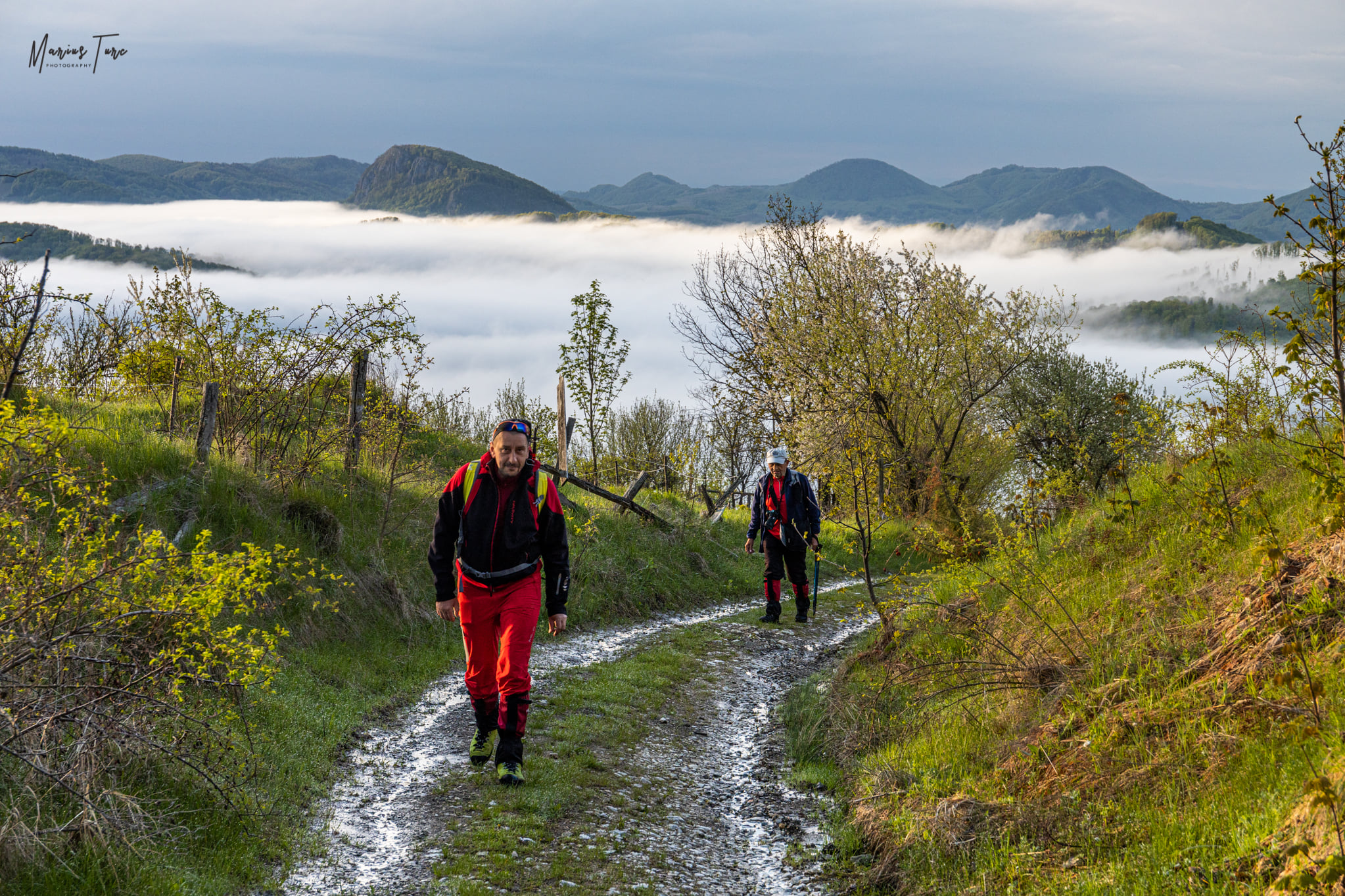 Drumul forestier spre poalele Muntelui Vulcan - Marius Turc