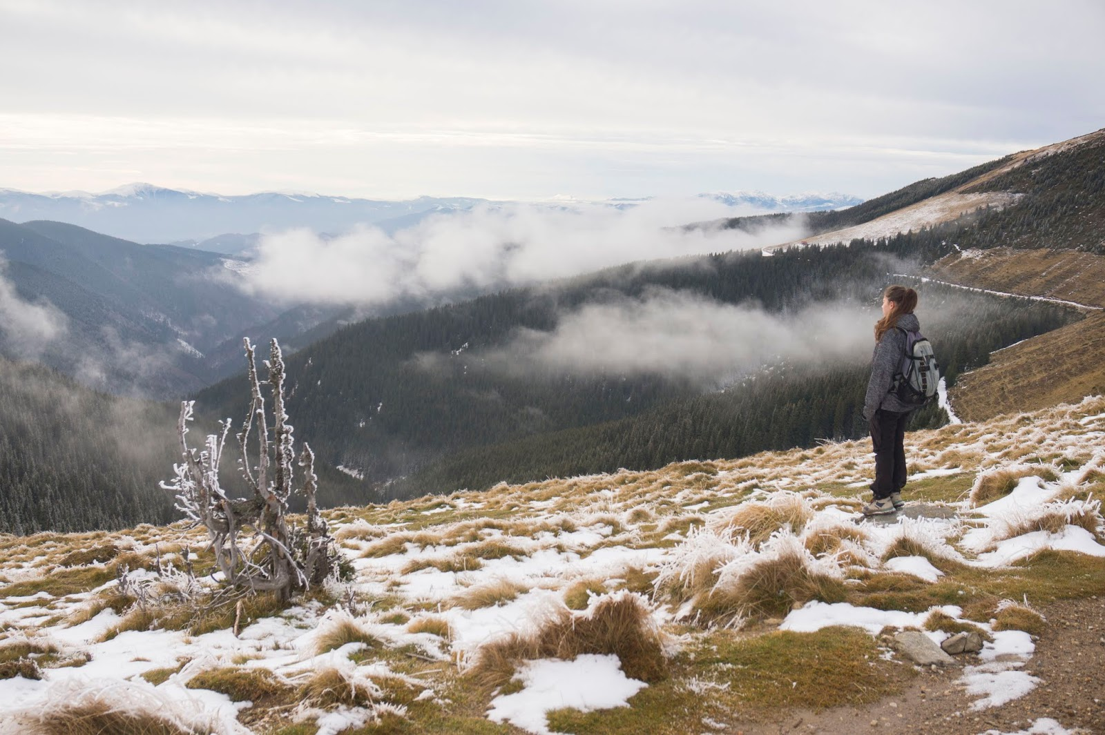 Poteca spre-varful-Sureanu-muntii-Sureanu - Alina Cirja