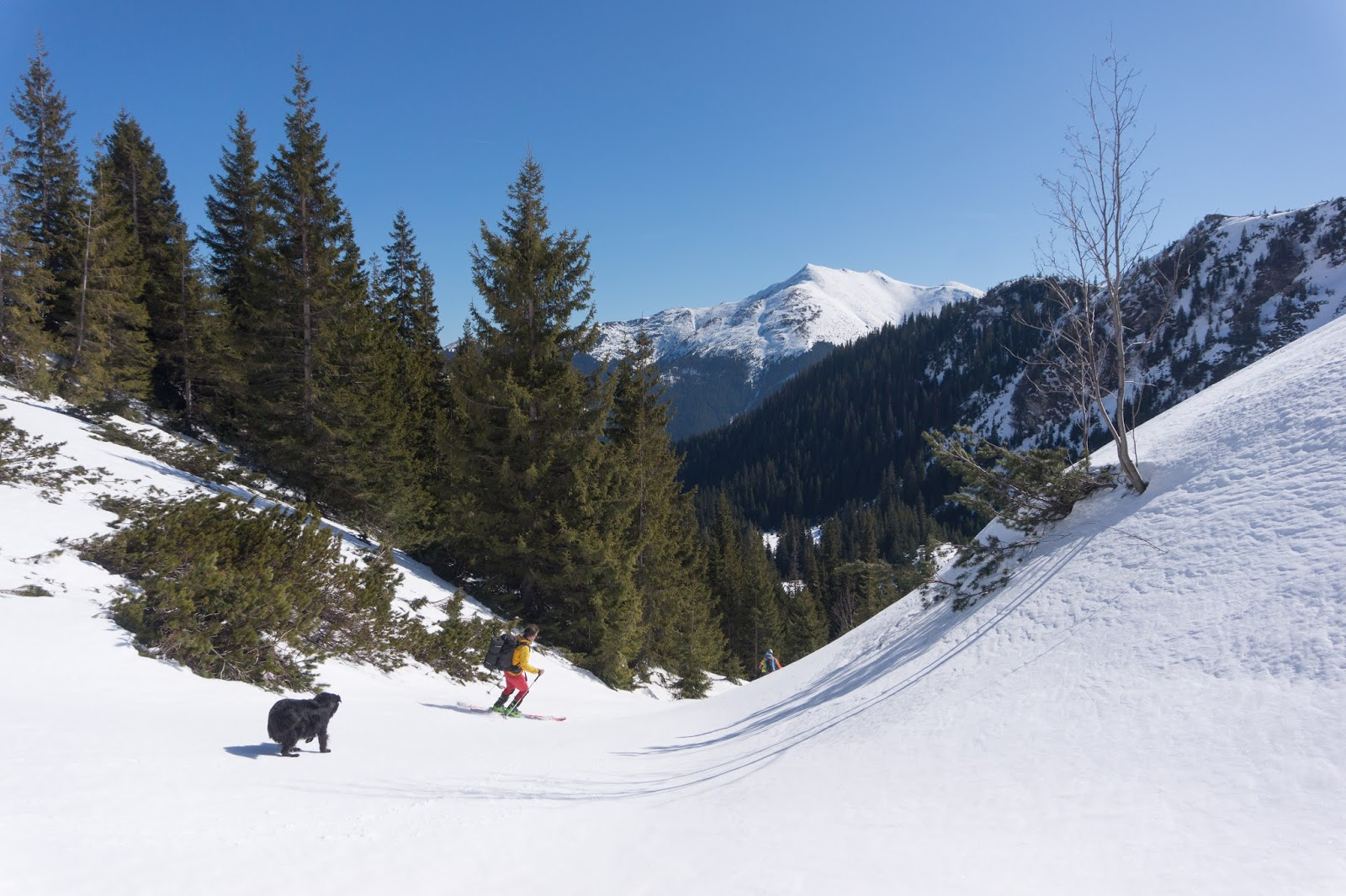 Priveliștea spre vârful Puzdrele - Alina Cîrja