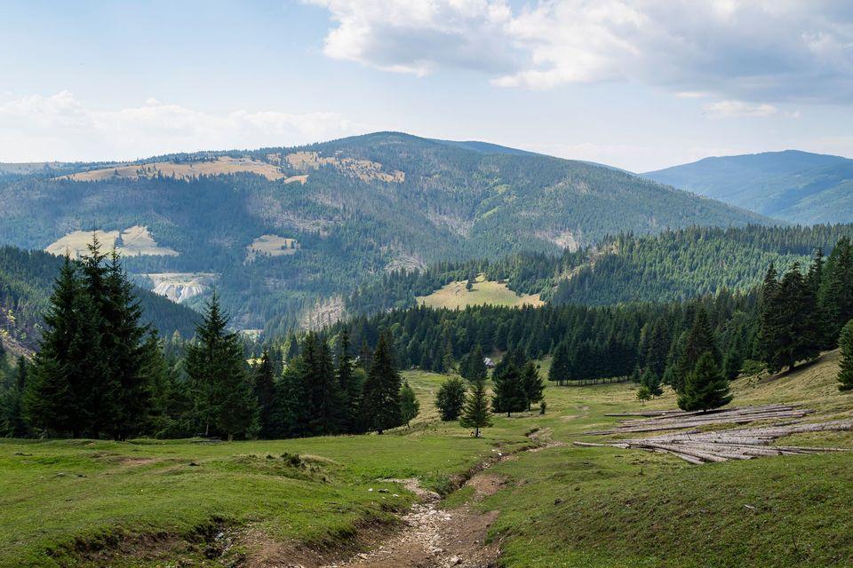 Vedere spre valea Oltului - Andrei Pahomi