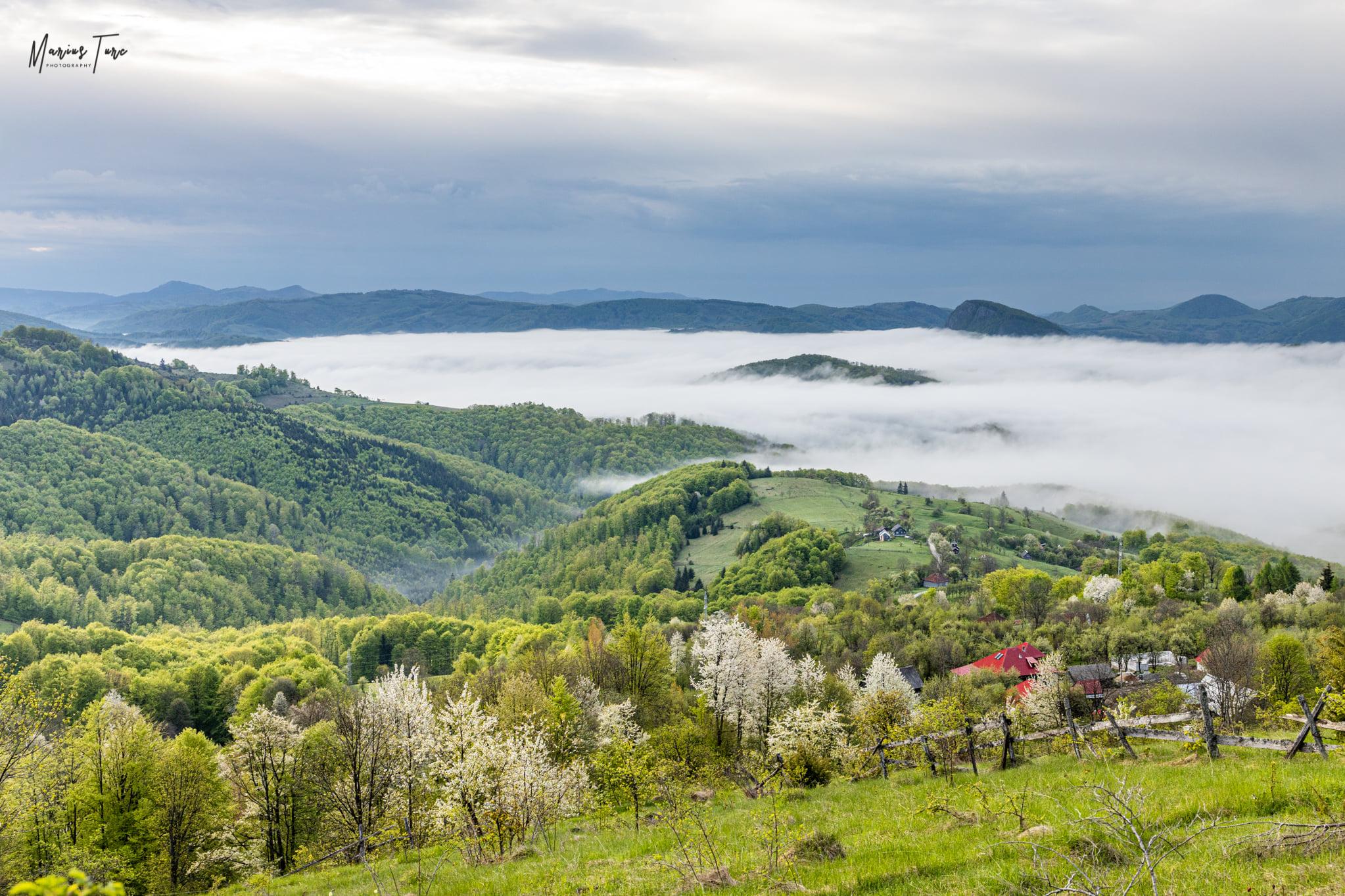 La poale de munte, cireșii abia au inflorit - Marius Turc