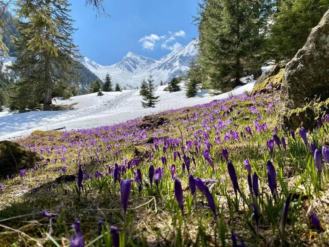 Branduse poiana Valea Sambetei - Carina Luana Mircea