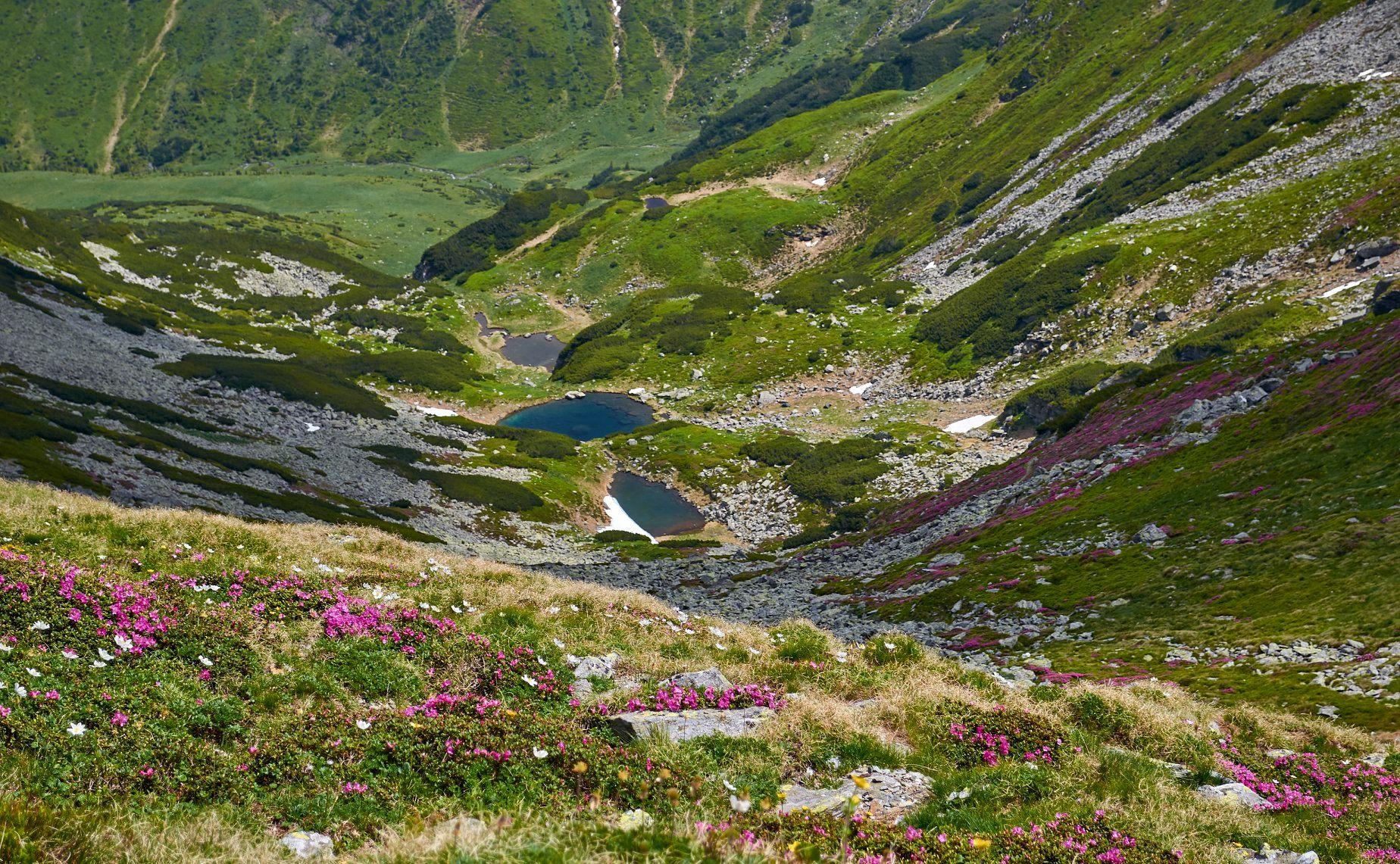 Bujori in apropiere de Taurile Buhaescu - Robert Dogaru