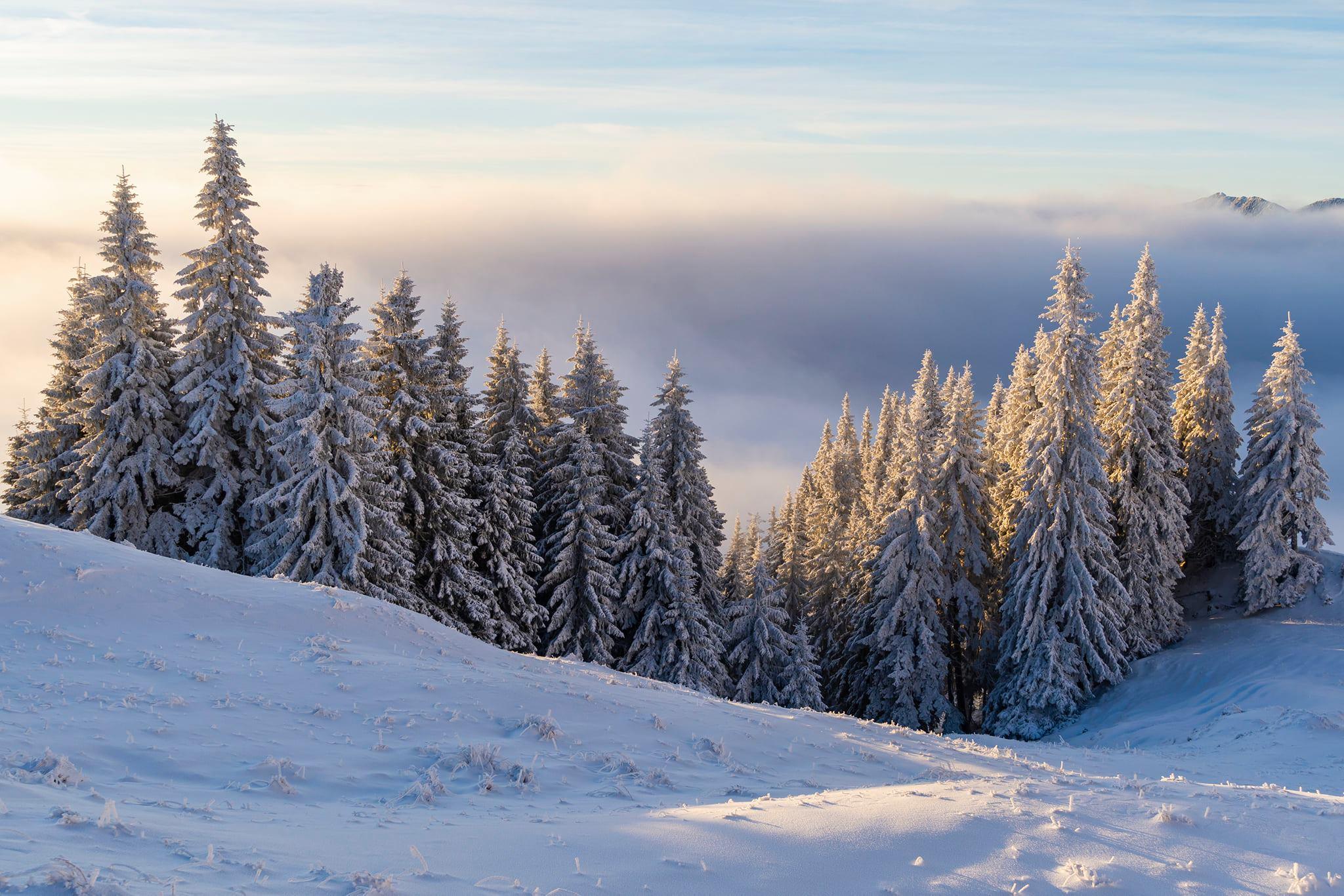 Cele mai frumoase decorațiuni de iarnă - Amdrei Pahomi