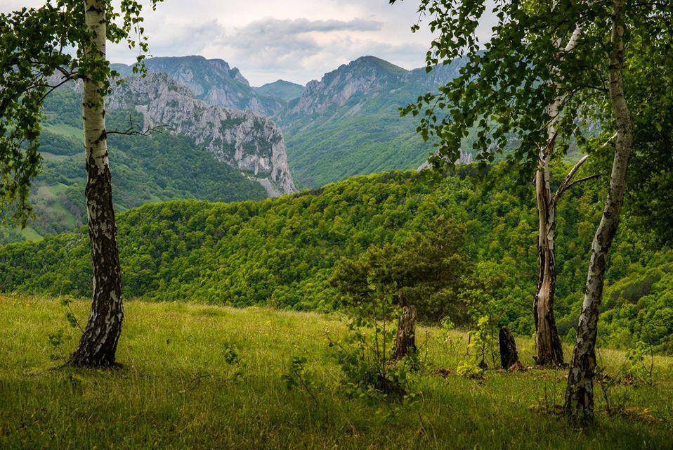 Cheia Manastirii printre mesteceni - Morar Daniel