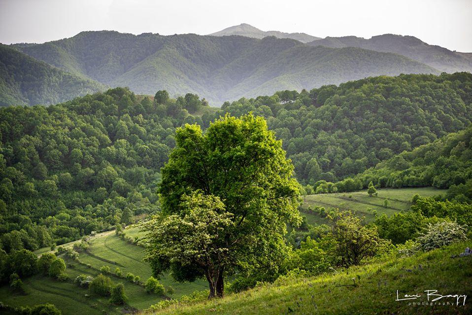 Copac Solitar Cheile Aiudului - Levi Bagy Photography