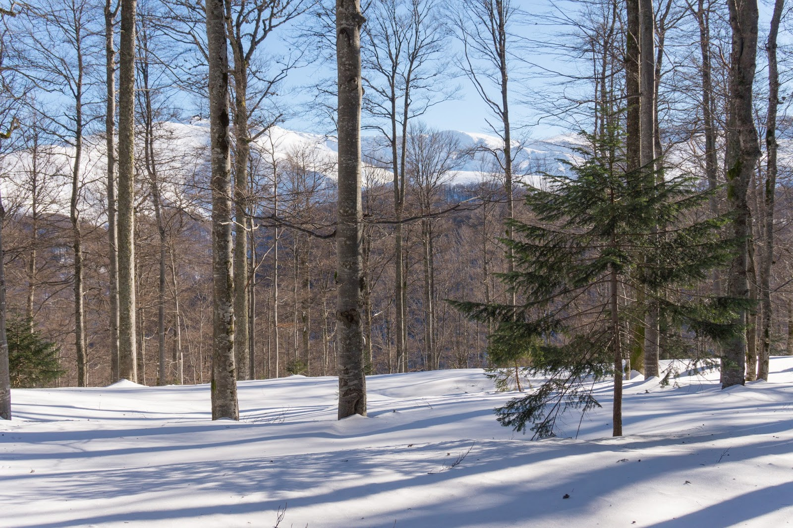 Dincolo de pădure se zărește creasta - Alina Cirja
