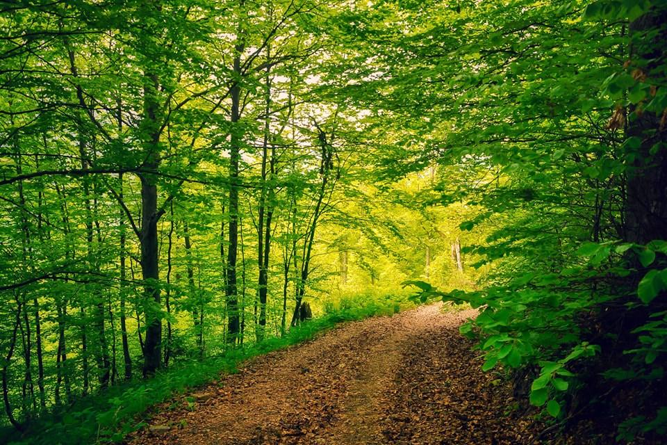 Drumul forestier spre Dealul Popii - Iulian Radu