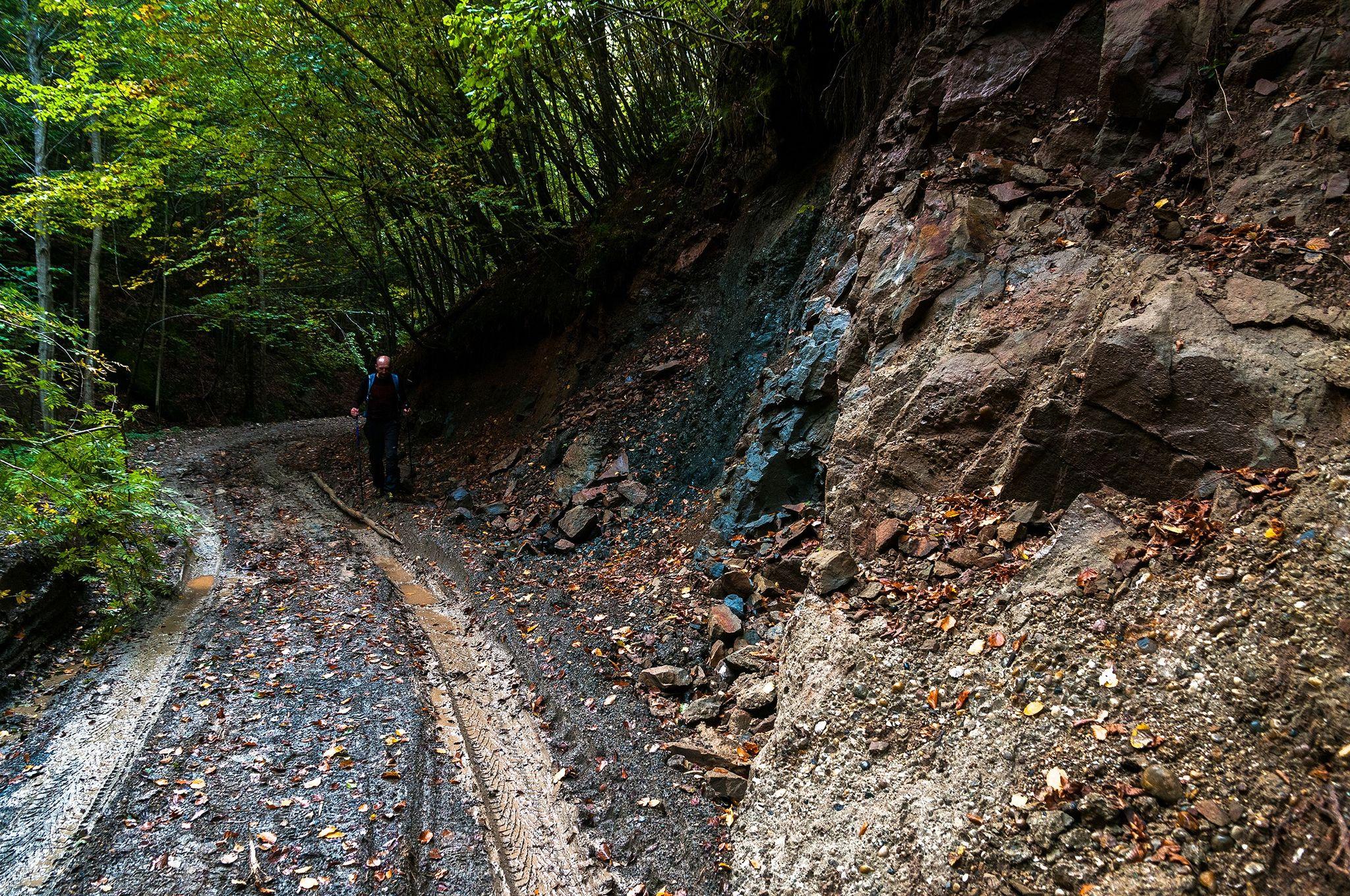 Drumul forestier spre Valea Jiului de Vest - Daniel Morar