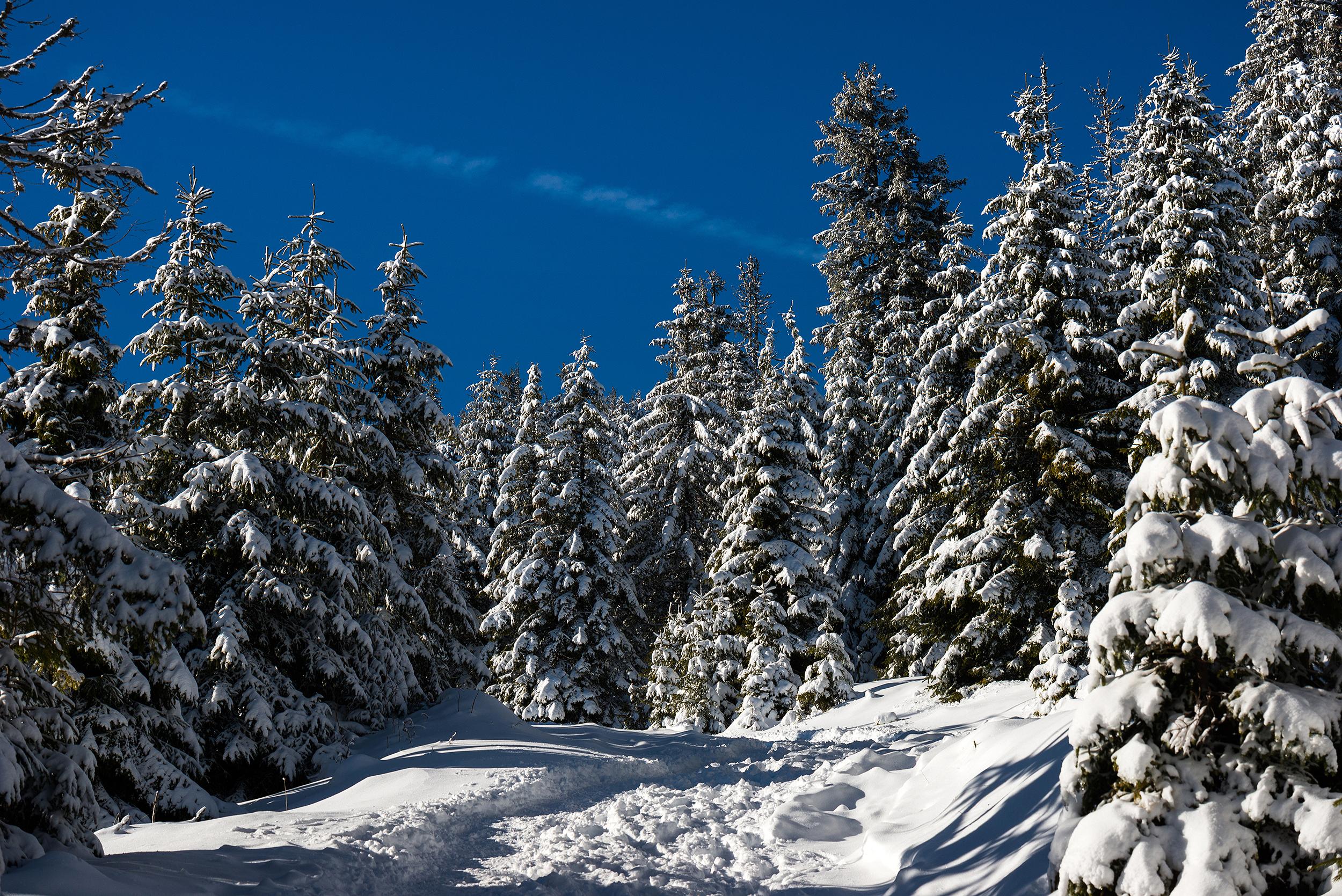 Munții Vlădeasa