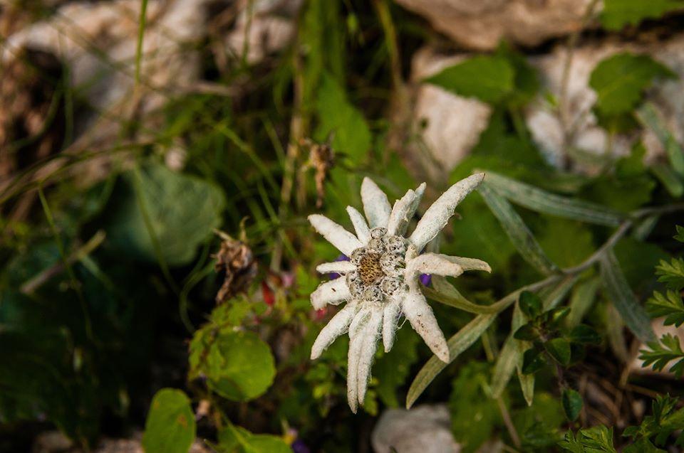 Floare de colt - Morar Daniel