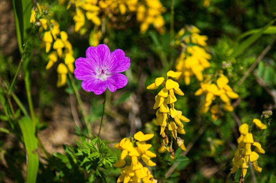 Flora in Cheia Manastirii - Morar Daniel