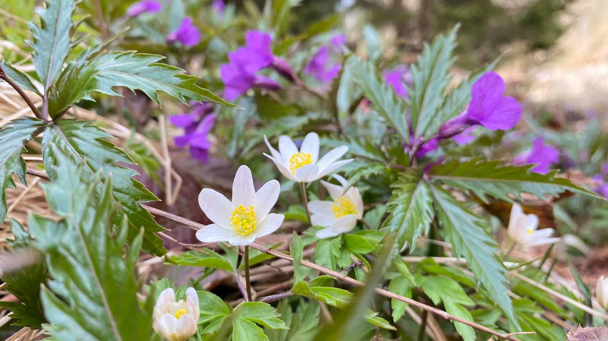 Floricele frumos colorate Valea Sambetei - Marius Popa