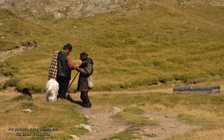 ciobani pe munte