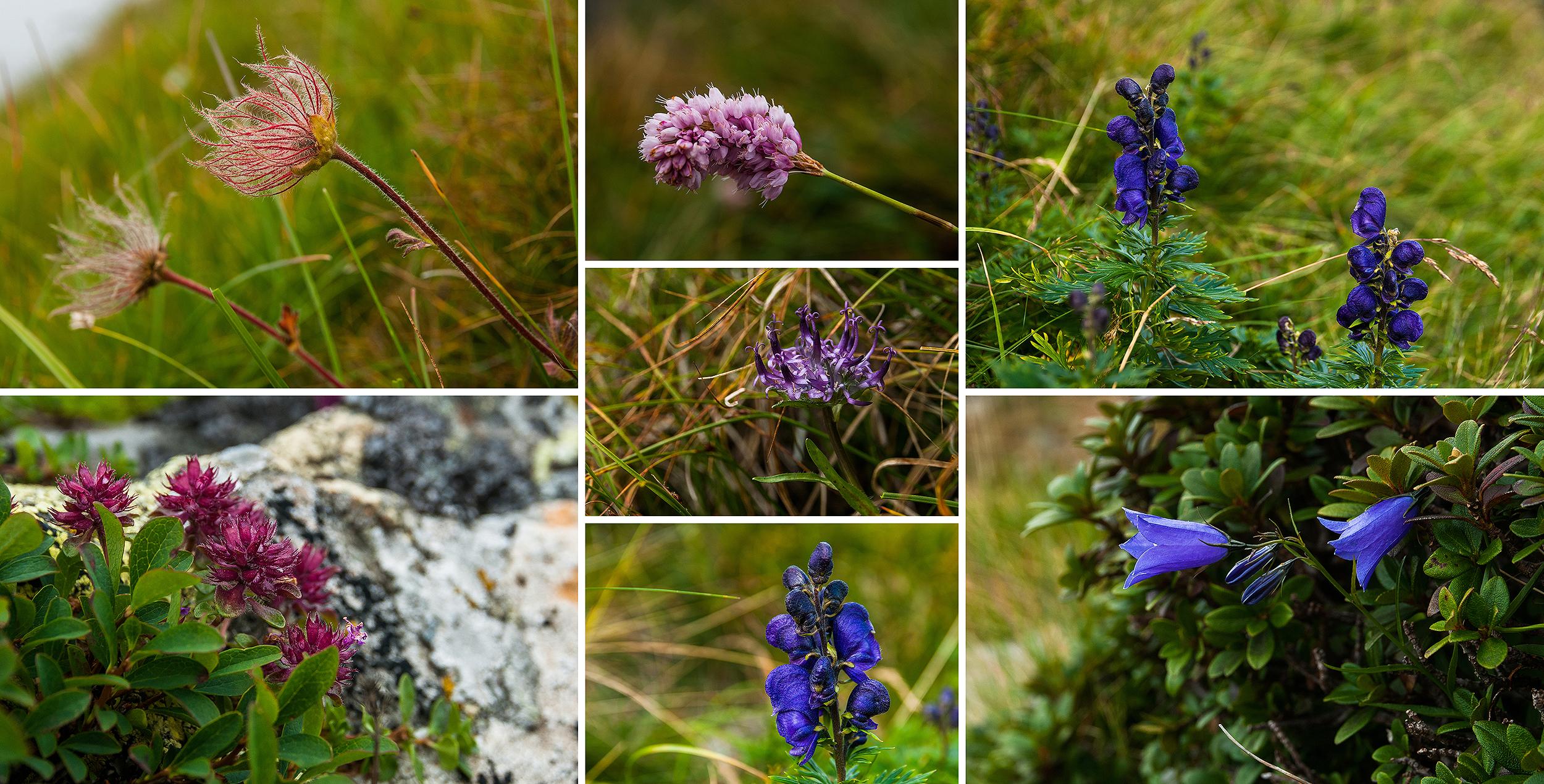 Și multe flori. Clopoței de munte, omag, firuță și multe altele pe care nu le cunoaștem după nume.