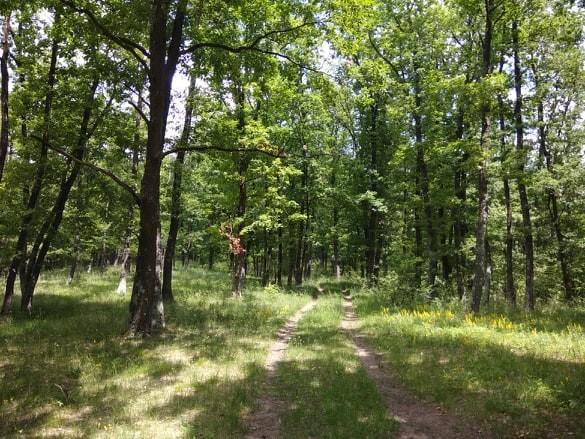Padurea de stejar pufos - Manu Muntomanu