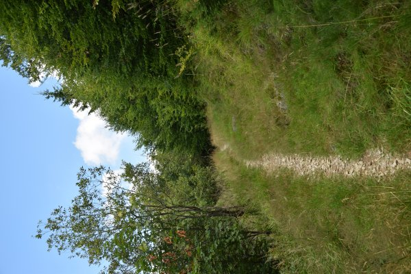 23_Single trail.JPG