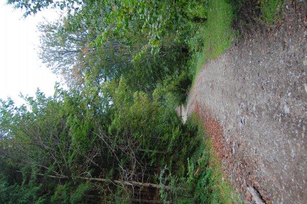 27_Drum forestier in Valea Guga.JPG
