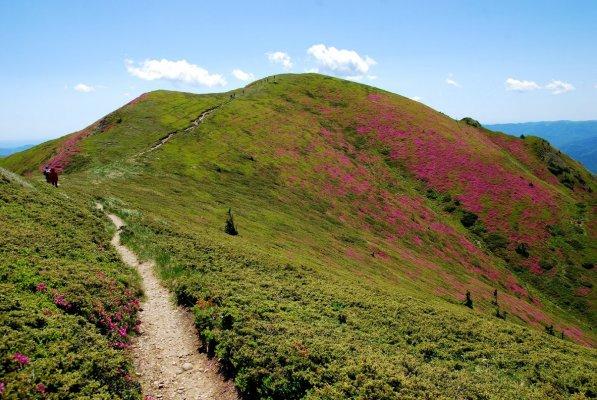 Culmea Gropsoarele-Zaganu in luna iunie - 07.JPG