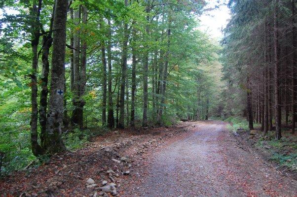 _13MN_img_27 Traseul merge pe drum forestier.jpg