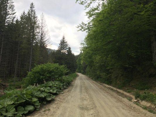 23mn img 22tr drumul forestier spre cabana craciuneasa