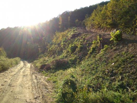 25mn img 13pr drumul forestier de pe valea maloasa