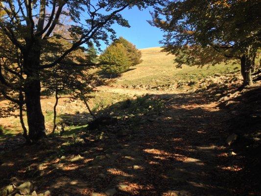 26mn img 20pr coborand pe drumul forestier de la poarta vanturilor 0