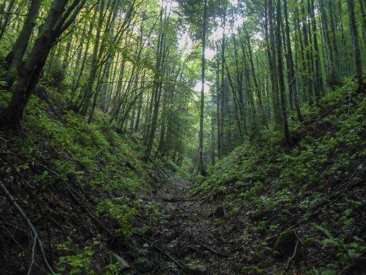 4mn img 16tr pe valea babarunca intre capatul drumului forestier si saua teslei 2
