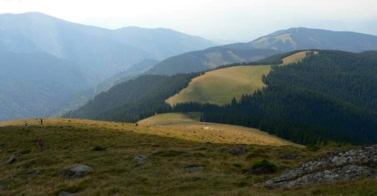 24 sureanu capra parang romania-natura