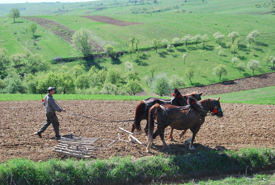 2MB img 39-Agricultura-traditionala-la-Girnic-Gernik-