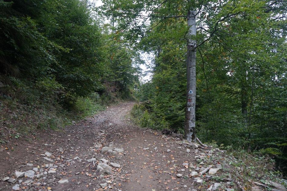 26mn img 22ta drumul forestier dintre localitatea crasna si poarta vanturilor