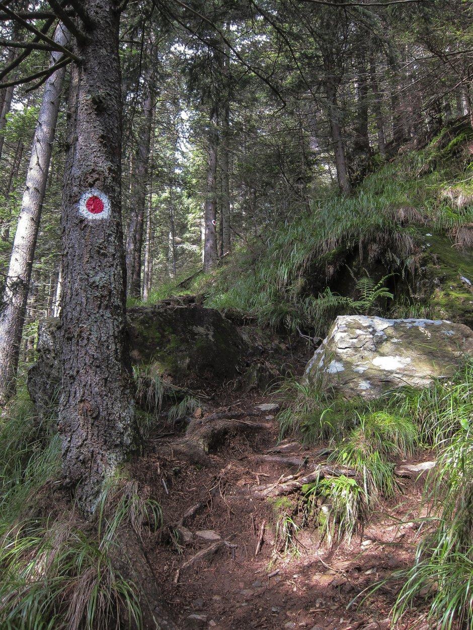 7mn img urcarea din valea sambetei in muchia dragusului - 61
