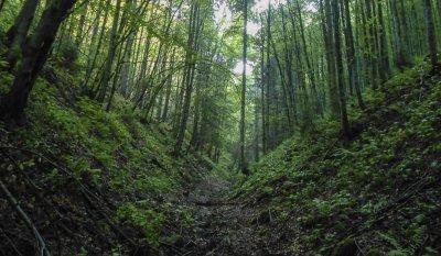 Pe_valea_Babarunca_intre_capatul_drumului_forestier_si_Saua_Teslei_-_16.JPG