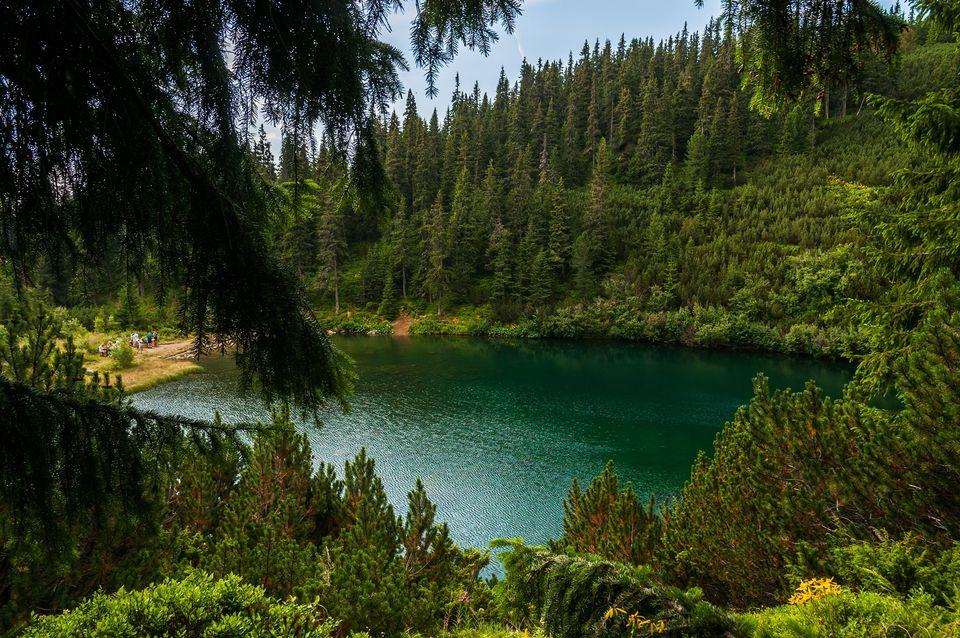 Turcoaz ambalat în verde-conifer - Morar Daniel