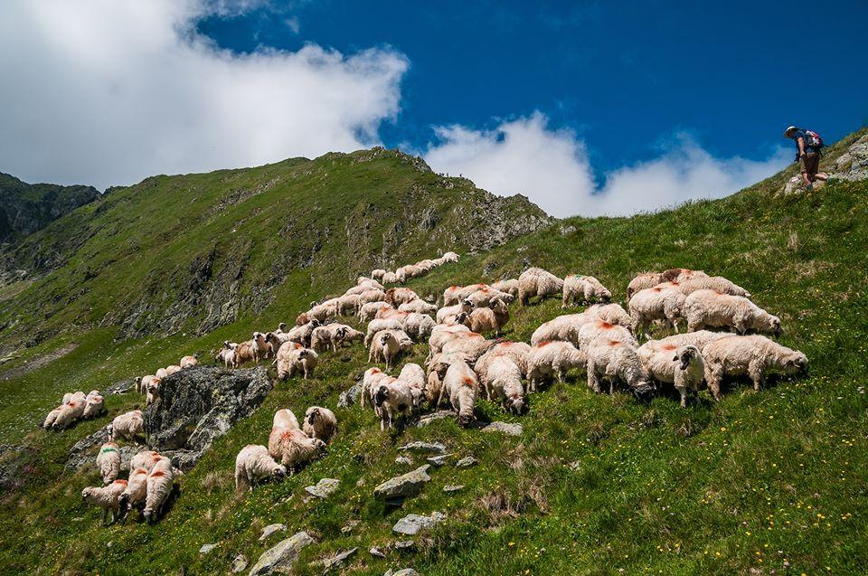 Turma de oi sub Portita Vistei -  Morar Daniel