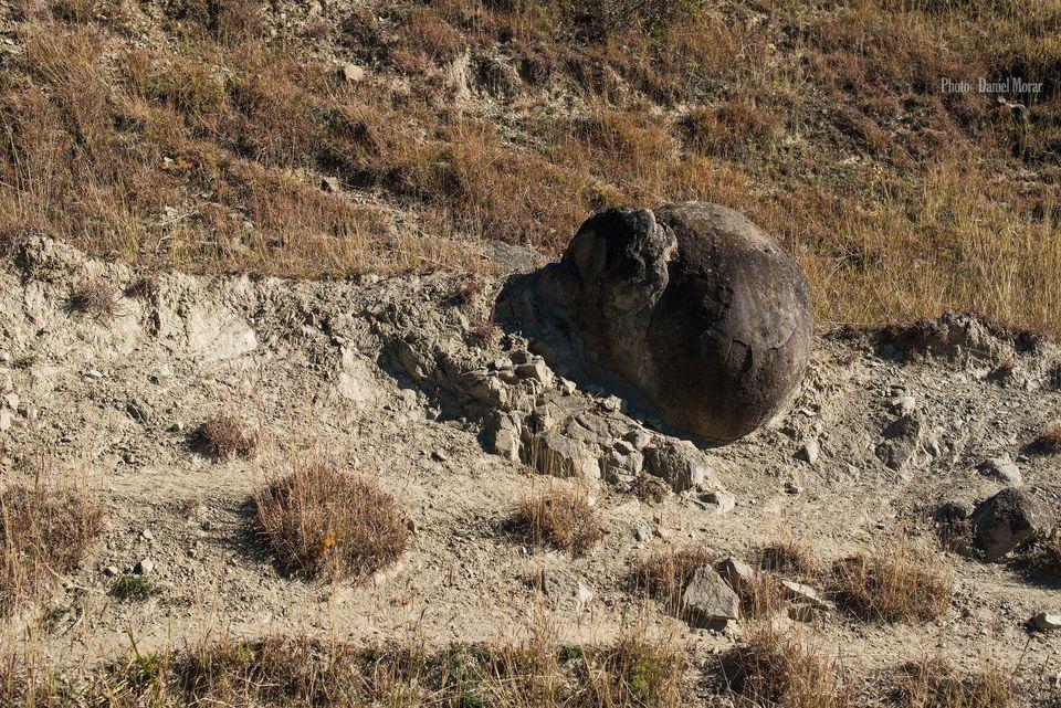 Unul din trovanții scoși la iveala de eroziune - Daniel Morar