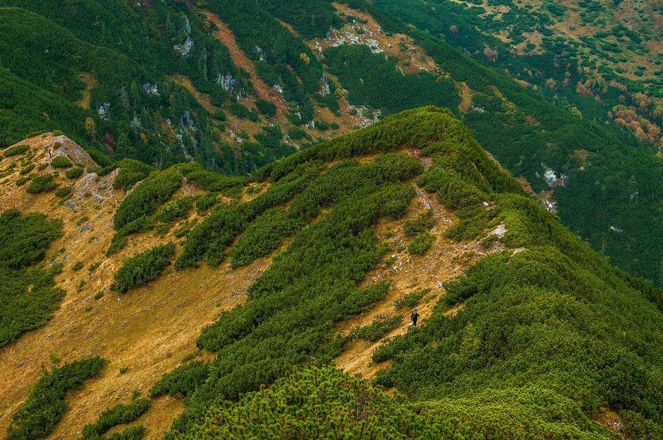 Urcarea din Șaua Iepei spre Vf. Piule - Daniel Morar