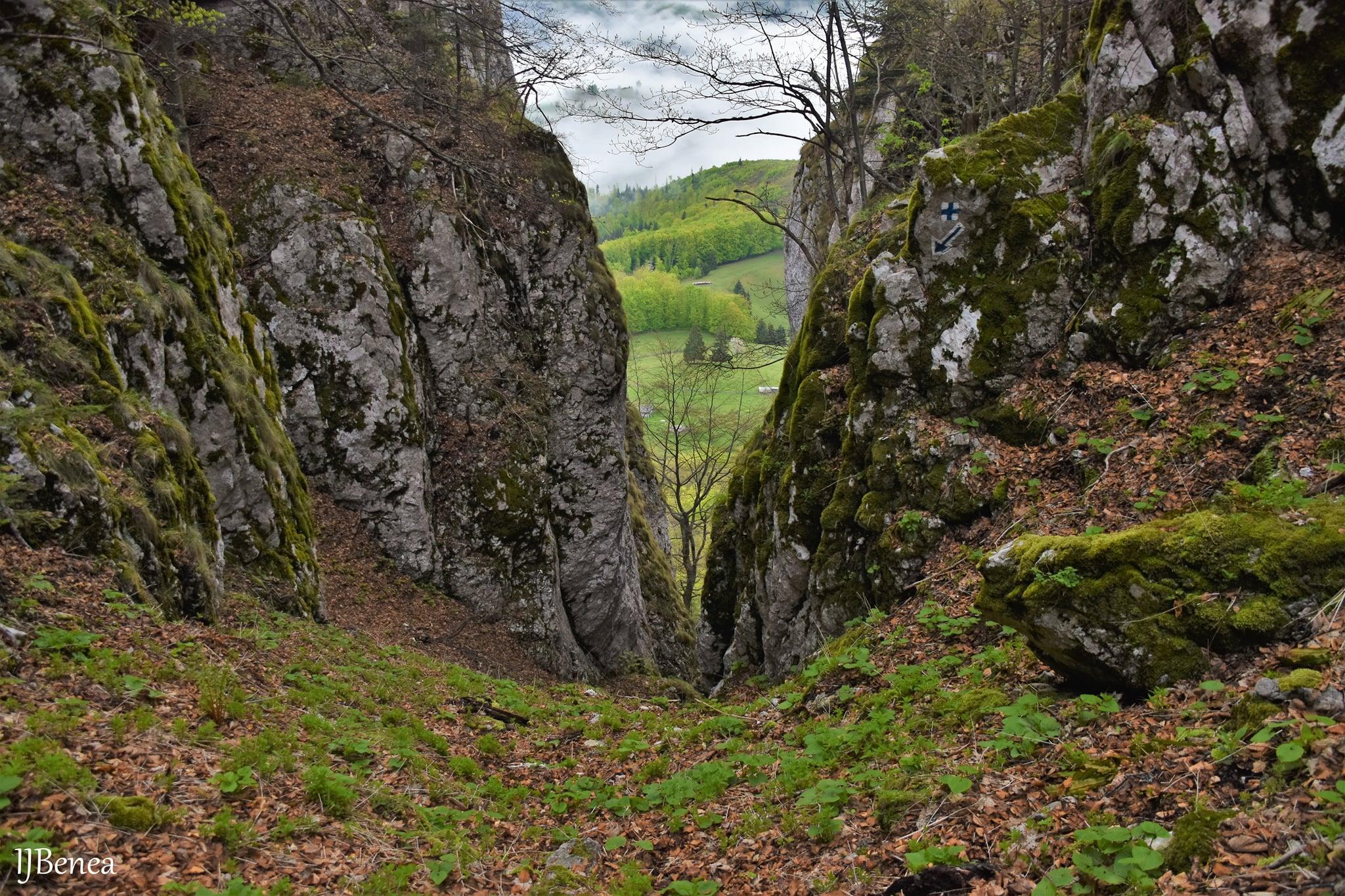 Urcarea spre Poiana Între Vulcani (Platoul Mic) - Ioan Benea Jurca