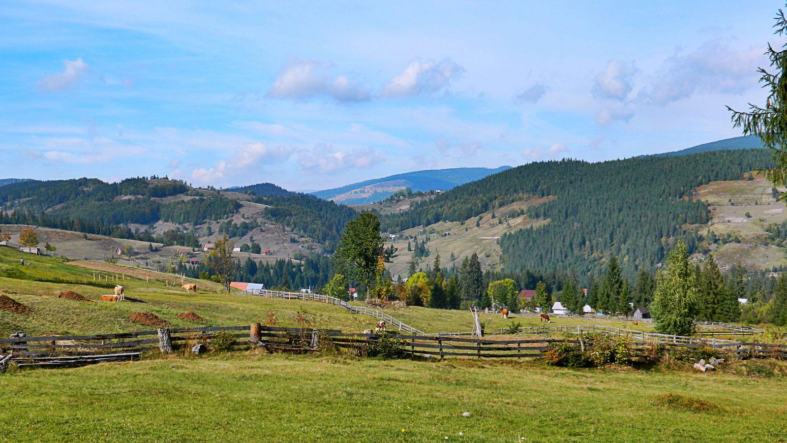 Valea Cepelor spre Vf. Bihorul
